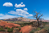 This area around Abique, NM is sometimes also referred to as Georgia O'Keeffe country. Her NM studio is only a few miles from here.  Scenic artistic landscapes indeed.