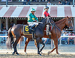 Hot Springs in the post parade as Raging Bull (no. 3) wins the Saranac Stakes (Grade 3), Sep. 1, 2018 at the Saratoga Race Course, Saratoga Springs, NY.  Ridden by Joel Rosario, and trained by Chad Brown, Raging Bull finished 1 1/4 lengths in front of Up the Ante (No. 1).  (Bruce Dudek/Eclipse Sportswire)
