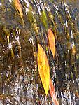 Leaves in waterfall