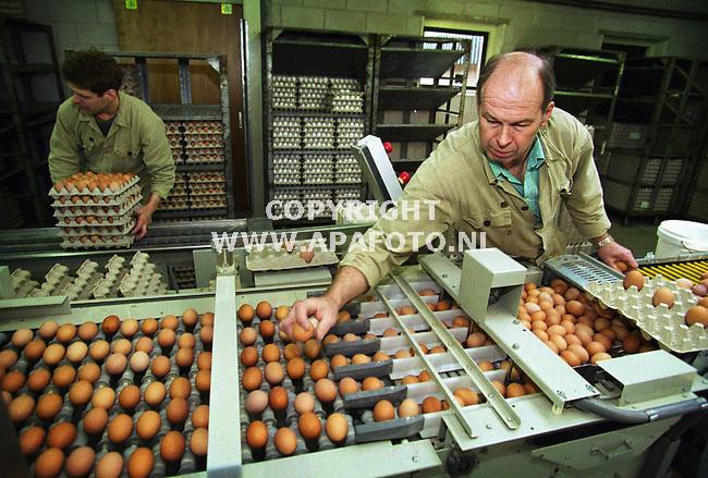doetinchem , 220300  foto : Koos Groenewold (APA)<br />Dhr Thomesen bekijkt geconcentreerd alle eieren om te kijken of er kapotte of vuile eieren tussen zitten.