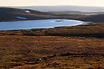 Alpine tundra habitat in Norway's arctic. Varanger Peninsula. June.