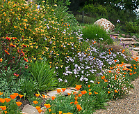 Colorful deer proof, summer-dry, drought tolerant flower garden on hill including California native plants with gravel path, Torgovitsky; Orange flower sticky Monkey Flower (Mimulus aurantiacus) and Verbena rigid