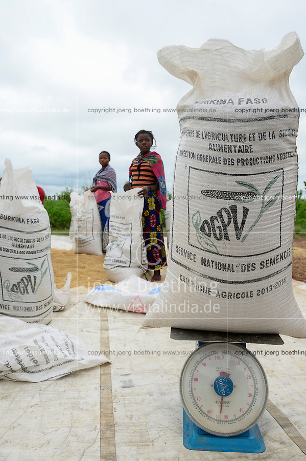 BURKINA FASO, Gaoua, rice hybrid seed production for Nafaso, women dry and packaging rice seeds / GIZ Projekt ProCIV Grüne Innovationszentren, WSK Reis, Saatgut Herstellung, Trocknung und Verpackung von Reis Hybrid Saatgut bei Saatgutproduzent Nahondomo Patenfo, Lieferung an Nafaso
