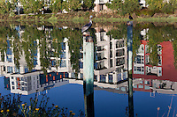 Mission Creek reflects office and apartment building while birds sit on pilings in the middle of the creek.