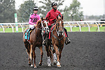 Catch a Glimpse(9) with Jockey Florent Geroux aboard walks to the winners circle after running to victory at the Natalma Stakes at Woodbine Race Course in Toronto, Canada on September 12, 2015.