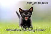 REALISTIC ANIMALS, REALISTISCHE TIERE, ANIMALES REALISTICOS, cats, paintings+++++,USLGSC162044523,#A#, EVERYDAY ,photos,fotos,pounce,cat,cats,kitten,kittens,Seth