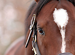 17 January 2010.   Kentucky Stallion Farms.  Thewayyouare at Ashford Stud.  Thewayyouare is new for the 2010 stallion roster.