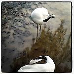 cranes by instagram