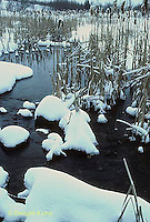 PO04-001a  Small pond with cattails in winter