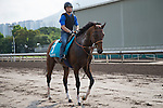SHA TIN,HONG KONG-APRIL 25: Maurice,trained by Noriyuki Hori,exercises in preparation for the Champions Mile at Sha Tin Racecourse on April 25,2016 in Sha Tin,New Territories,Hong Kong (Photo by Kaz Ishida/Eclipse Sportswire/Getty Images)