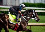 LOUISVILLE, KY - MAY 02: Majesto, trained by Gustavo Delgado and owned by Grupo 7C Racing Stable, exercises and prepares during morning workouts for the Kentucky Derby and Kentucky Oaks at Churchill Downs on May 2, 2016 in Louisville, Kentucky. (photo by Scott Serio/Eclipse Sportswire/Getty Images)