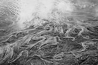 Meroo Lake Sea Grass