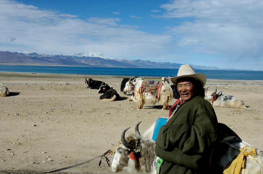 Tibetan Nomad and Yaks at Lake Namtso which is the highest saltwater lake in the world at an elevation of 4870 meters. Domesticated yaks have been kept for thousands of years, primarily for their milk, fibre and meat, and as beasts of burden. Their dried droppings are an important fuel, used all over Tibet, and are often the only fuel available on the high treeless Tibetan Plateau