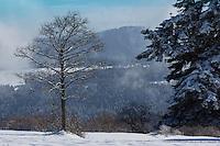 Europe/France/Franche-Comté/25/Doubs/env de Pontarlier: Au sommet du Larmont // France, Doubs, Near Pontarlier: At the top of Larmont