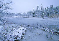 Snow covered savannah, pine trees and winter stream. Pine Barrens, New Jersey