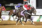 February 19, 2021: MARKAB ALREEH #12 is first past the post in the last round of the jockeys challenge with jockey A. Alfouraidi on International Jockeys Challenge Day, King Abdulaziz Racecourse, Riyadh, Saudi Arabia. Shamela Hanley/Eclipse Sportswire