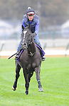 3 November 2010: Willcox Inn, trained by Michael Stidham and to be ridden by jockey John Velazquez, works out for the 2010 Breeders Cup at Churchill Downs in Louisville, Kentucky.(Scott Serio/Eclipse Sportswire)