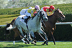 10 April 2010: Sliver Timber (gray) with Julien Leparoux up take the G3 Shakertown Stakes on the turf at Keeneland Race Course in Lexington, Kentucky.