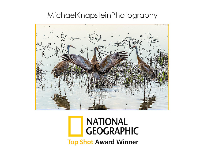 """The image """"Crane Dance"""" by photographer Michael Knapstein won the prestigious """"Top Shot"""" Award from National Geographic in September, 2014."""