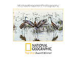 "The image ""Crane Dance"" by photographer Michael Knapstein won the prestigious ""Top Shot"" Award from National Geographic in September, 2014."