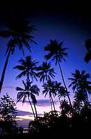 palm tree sunrise silhouette against dark blue sky. Dorado Puerto Rico, Hyatt Beach resort.