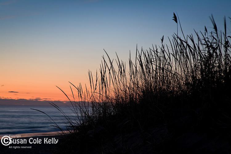 American Beach Grass at Coast Guard Beach, Eastham, Cape Cod National Seashore, MA, USA
