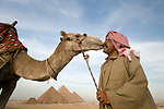 A local Egyptian man gets a kiss from his camel at the Pyramids of Giza near Cairo, Egypt.