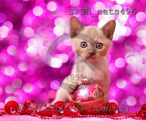 Xavier, CHRISTMAS ANIMALS, photos(SPCHcats495,#XA#)
