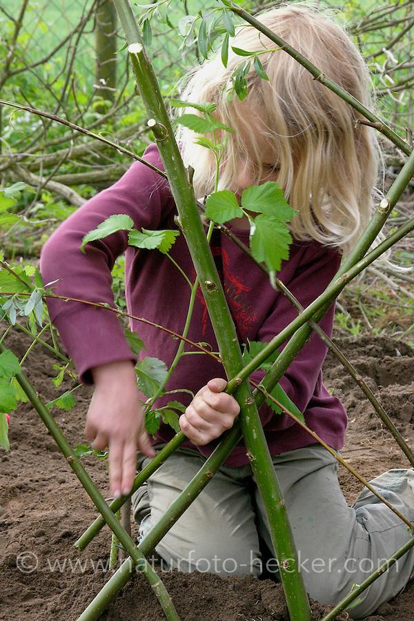 Bau eines Weidenzauns für den Schulgarten, Garten der Grundschule Nusse wird als Projektarbeit von einer 1. Klasse gestaltet, Mädchen steckt Weidenzweige in die Erde und verflechtet sie, Weidenzaun, Gartenarbeit