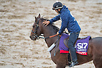 October 28, 2015 :   Runhappy, trained by Maria Borell and owned by James Mcingvale, exercises in preparation for the Breeders' Cup Sprint at Keeneland Race Track in Lexington, Kentucky on October 28, 2015. Scott Serio/ESW/CSM