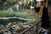 Koi fish pond, Japan.
