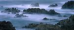 A misty morning on the Monterey Coast, California.
