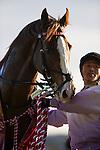 FUCHU,JAPAN-FEBRUARY 12: Suave Richard,ridden by Hirofumi Shii, after winning the Kyodo News Service Hai at Tokyo Racecourse on February 12,2017 in Fuchu,Tokyo,Japan (Photo by Kaz Ishida/Eclipse Sportswire/Getty Images)