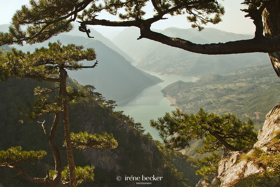 Viewpoint Banjska stena. Tara Mountain - Serbia