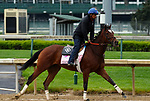 LOUISVILLE, KY -APR 25: Coach Rocks trains for the Kentucky Oaks at Churchill Downs, Louisville, Kentucky. (Photo by Mary M. Meek/Eclipse Sportswire/Getty Images)