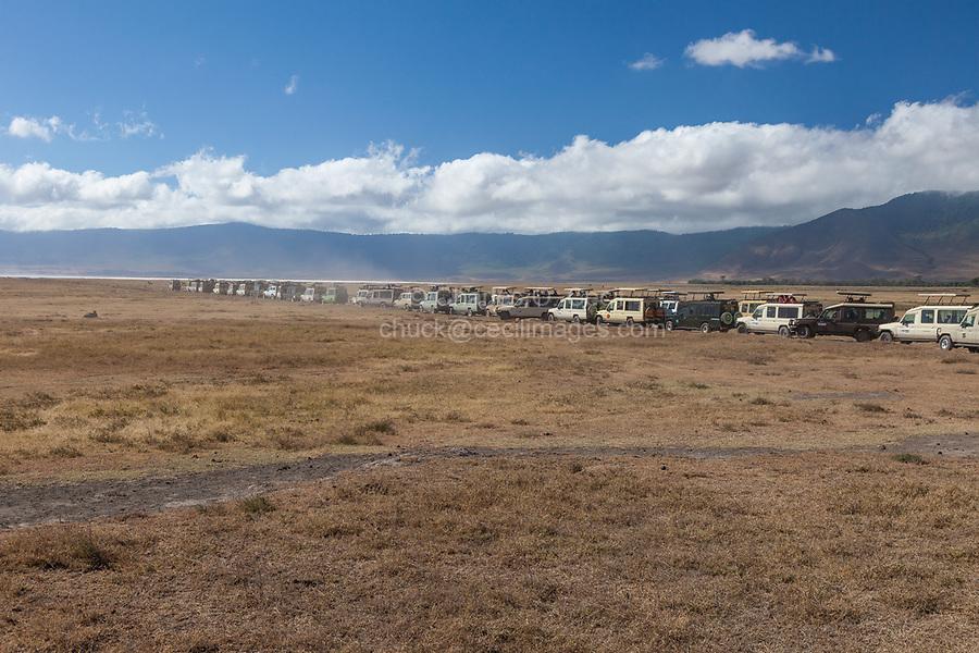 Tanzania. Ngorongoro.  Tourist Vehicles Watching a Lion Sitting in Grass, on left.