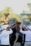 Nov. 03, 2012 - Arcadia, California, U.S - Wise Dan receives a much deserved sponge down after John Velazquez rode him to victory in the Breeders' Cup Mile at Santa Anita Park in Arcadia, CA. (Credit Image: © Jimmy Jones/Eclipse/ZUMAPRESS.com)