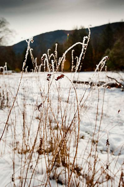 Winter sunlight through frozen field grasses