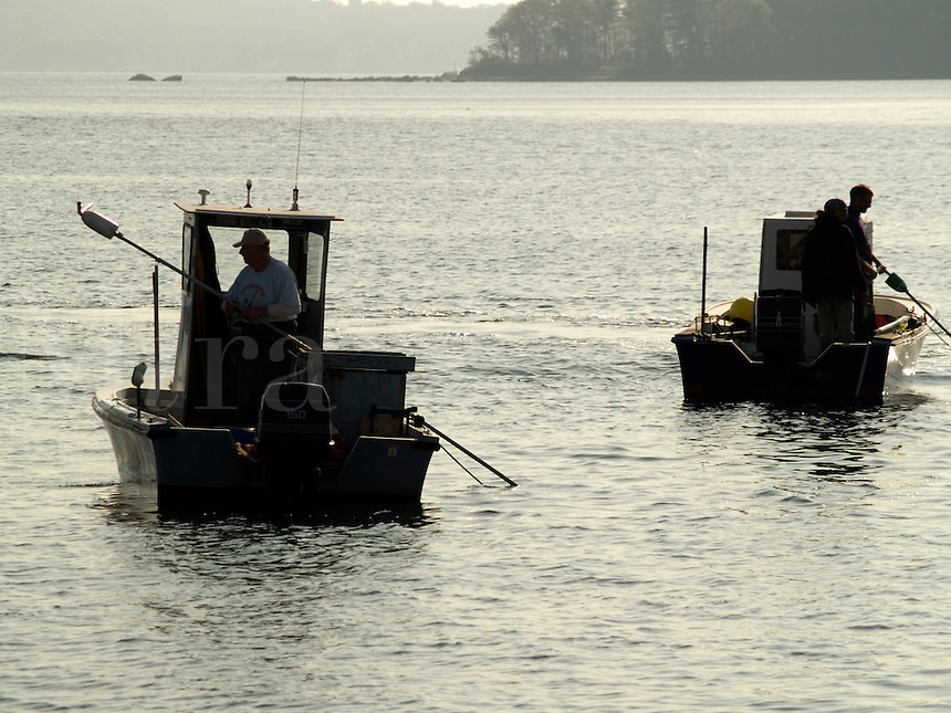 In East Greenwich, during a group harvest, a Quahoggers work raking for clams in Narragansett Bay. Once delivered to a larger boat, that will take the clams to another part of Narragansett Bay, transplanting them from East Greenwich, Rhode Island.