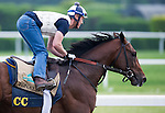 June 4, 2014: Tonalist gallops during morning preparations for the Belmont Stakes at Belmont Park in Elmont, New York. Scott Serio/ESW/CSM