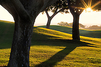 Sunrise through trees and lawn at Four Seasons Hotel, Hawaii, The Big Island.