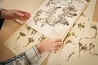 Alaska Center for Conservation Science lead botanist Justin Fulkerson discusses specimens in the collection of Alaska plants in UAA's Herbarium in Beatrice McDonald Hall.