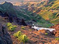 East Rim Overlook with thistles. Steens Mountain Wilderness, Oregon