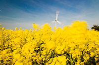 GERMANY Brunsbuettel, Repower wind turbine and rape seed field/ DEUTSCHLAND, Windkraftanlage Repower und Rapsfeld