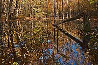 Autumn color on Gum Swamp, Cades Cove