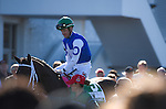 OLDSMAR, FLORIDA - FEBRUARY 13: Tepin #5 being mounted by jockey Julien Leparoux, while in the walking ring prior to the Lambholm South Endeavour Stakes at Tampa Bay Downs on February 13, 2016 in Oldsmar, Florida (photo by Doug DeFelice/Eclipse Sportswire/Getty Images)