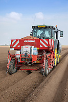 Planting potatoes - Lincolnshire, April