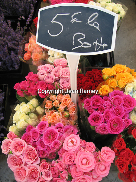 Roses of Provence