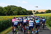 10th July 2021; Carcassonne, France;  The peloton passing through a field of sunflowers during stage 14 of the 108th edition of the 2021 Tour de France cycling race, a stage of 183,7 kms between Carcassonne and Quillan.