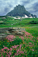 Lewis monkeyflower and Clements Mountain<br />